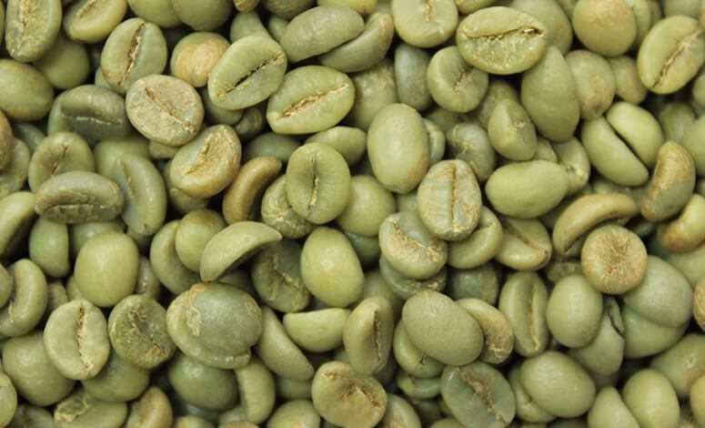 Washed Robusta