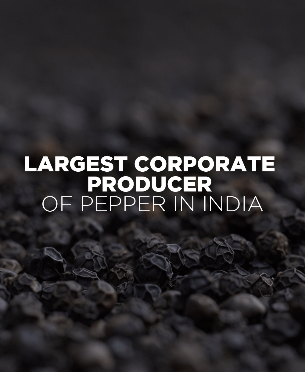 Largest Corporate Producer of Pepper in India  - Mobile - Tata Coffee