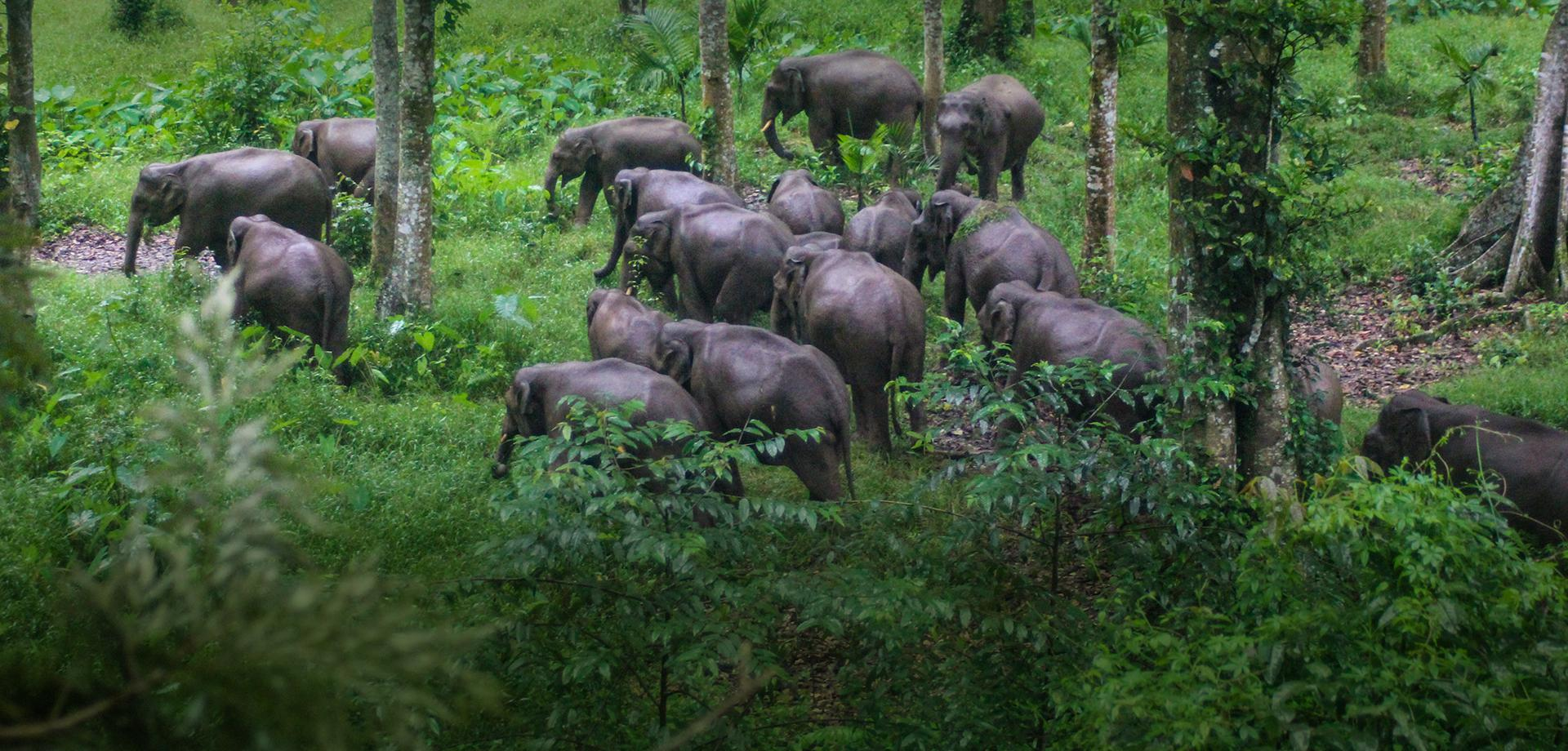 Amidst the home of elephants, coffee blooms in abundance - Tata Coffee