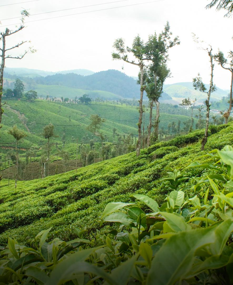 Green coffee dealers in bangalore
